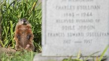 Groundhogs occasionally digging up bones, coffin pieces at Montreal cemetery