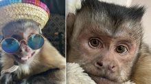 TikTok monkey with 17.6 million followers tragically dies