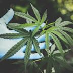 Cannabis Was Deemed an Essential Business. So, Why Can't the Industry Bank Legally?