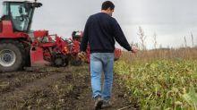 """Néonicotinoïdes réautorisés pour les betteraves : Générations Futures dénonce un retour en arrière face à un """"coup de pression des syndicats agricoles"""""""
