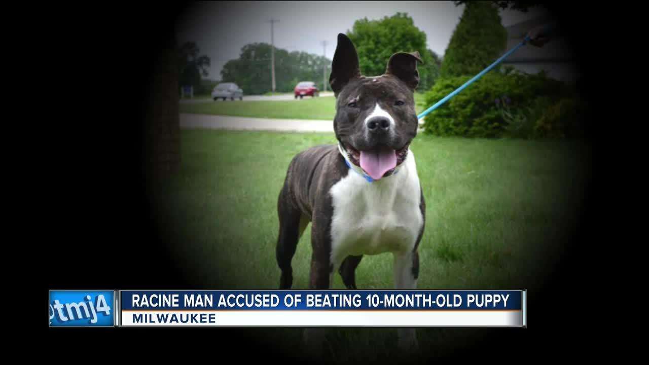 Puppy repeatedly beaten with pipe, belt recovering at Wisconsin Humane  Society