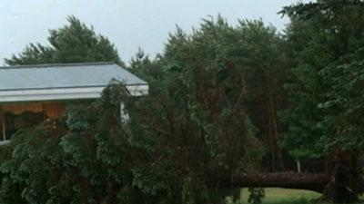 Sudden Storm Topples Wisconsin Trees