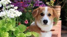 Central Garden & Pet (CENT) Q4 Earnings Lag, Guides FY18