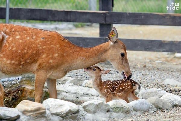 園區內還有池塘、大片田園及梅花鹿、紅鶴、山羌、馬等動物,十分親人,是親子共遊的好去處。