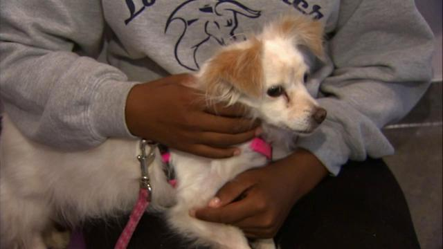 Shelter dogs help juvenile offenders turn life around