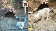 'Greek Hachiko': Dog Refuses to Leave Crash Site 18 Months After Owner is Killed in Greece