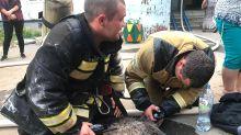 Dramatic moment firies resuscitate cat injured in 16-storey inferno
