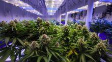 4 Marijuana Stocks to Buy Ahead of the Market Recovery