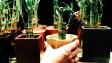 The best indoor plants to improve your feng shui