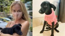 Angélica pede aos fãs sugestões de nomes para cachorrinha recém-adotada