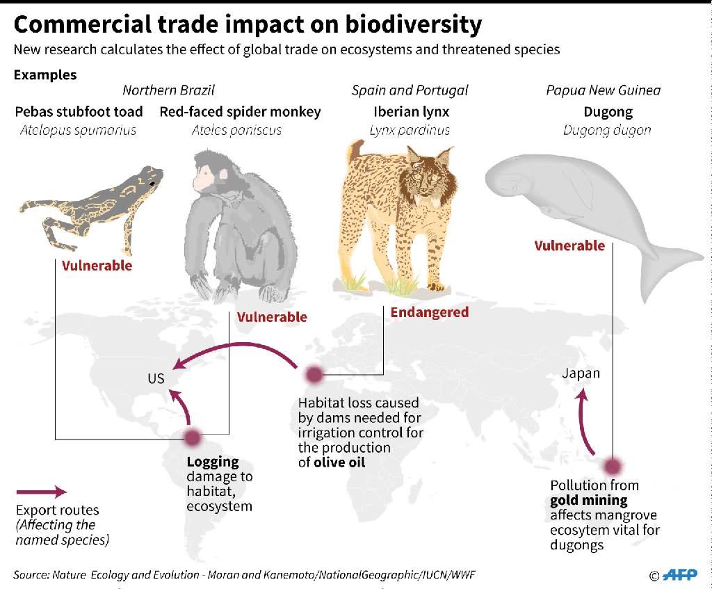 Commercial trade impact on biodiversity (AFP Photo/John SAEKI, Laurence CHU)