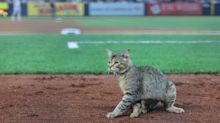 Cat receives MVP chants while invading field at Yankee Stadium