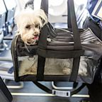 Everything You Need to Know About Traveling on a Plane with Your Dog