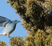 Mass deaths of migratory birds reported in New Mexico