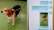Autocorrect fail leads to shocking dog groomer blunder: 'I'm in stitches'