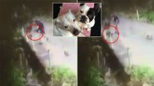 CCTV captures heartless man luring 14-week-old puppy, throwing it into creek