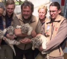 4 White Tiger Cubs Are Growing Up Healthy at Zoo: 'I Feel Like I Am the Father'