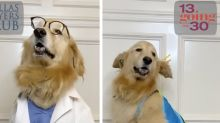 Jennifer Garner Just Gave Us 5 Genius Dog Halloween Costume Ideas Inspired By Her Acting Roles