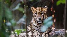Have wildlife documentaries spoilt the safari experience?