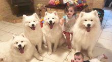 Mãe mostra como é cuidar de dois bebês e quatro cães em fotos cheias de fofura