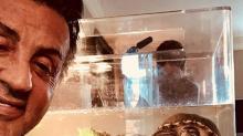 Las tortugas que regresan al cine ¡42 años después!