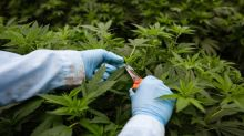 Scotts Miracle-Gro Pot Partner Flowr Nearly Triples in Debut