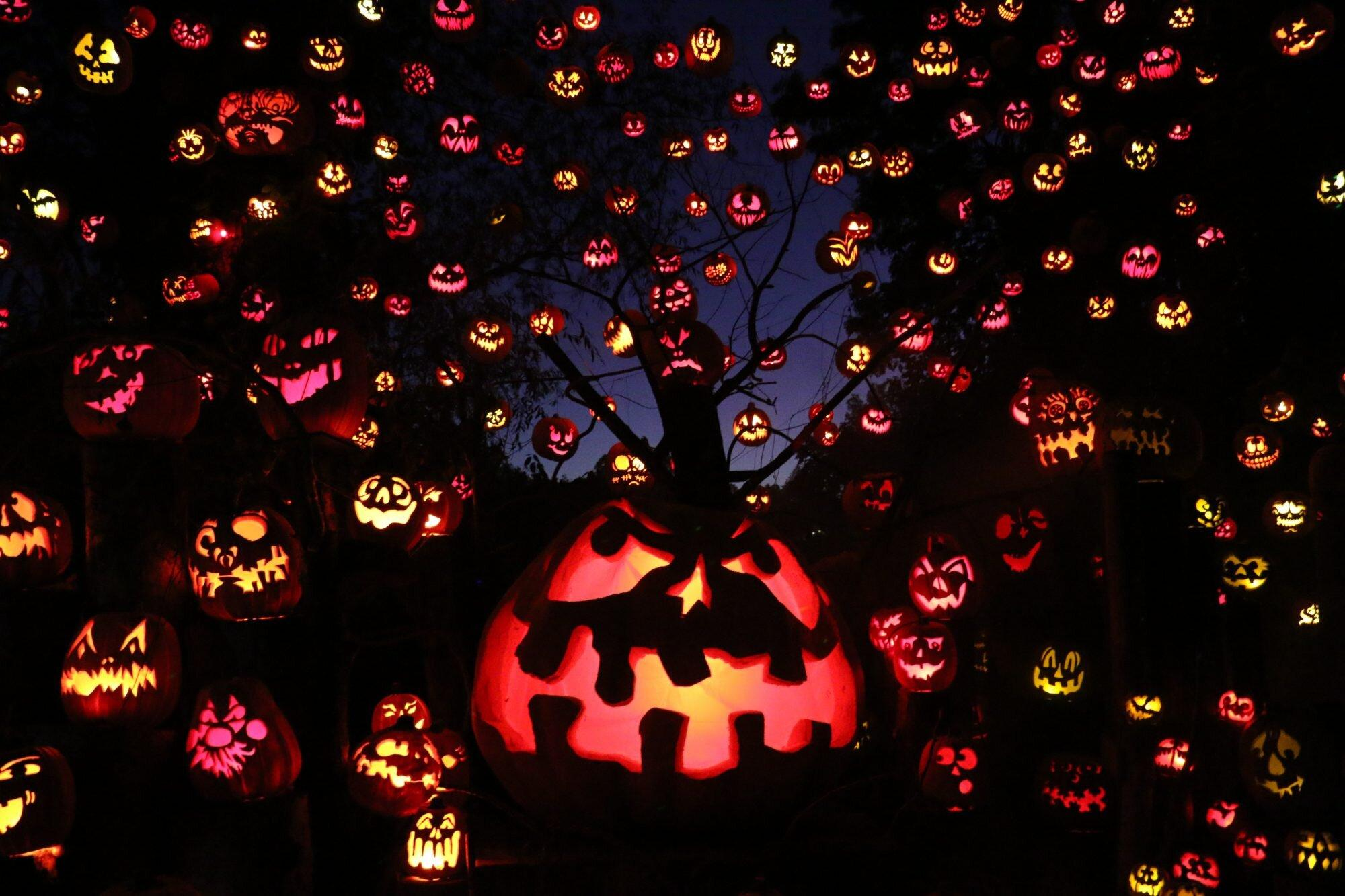 Halloween Activites 2020 Near Me 9 Halloween Activities Still Happening Near You in 2020