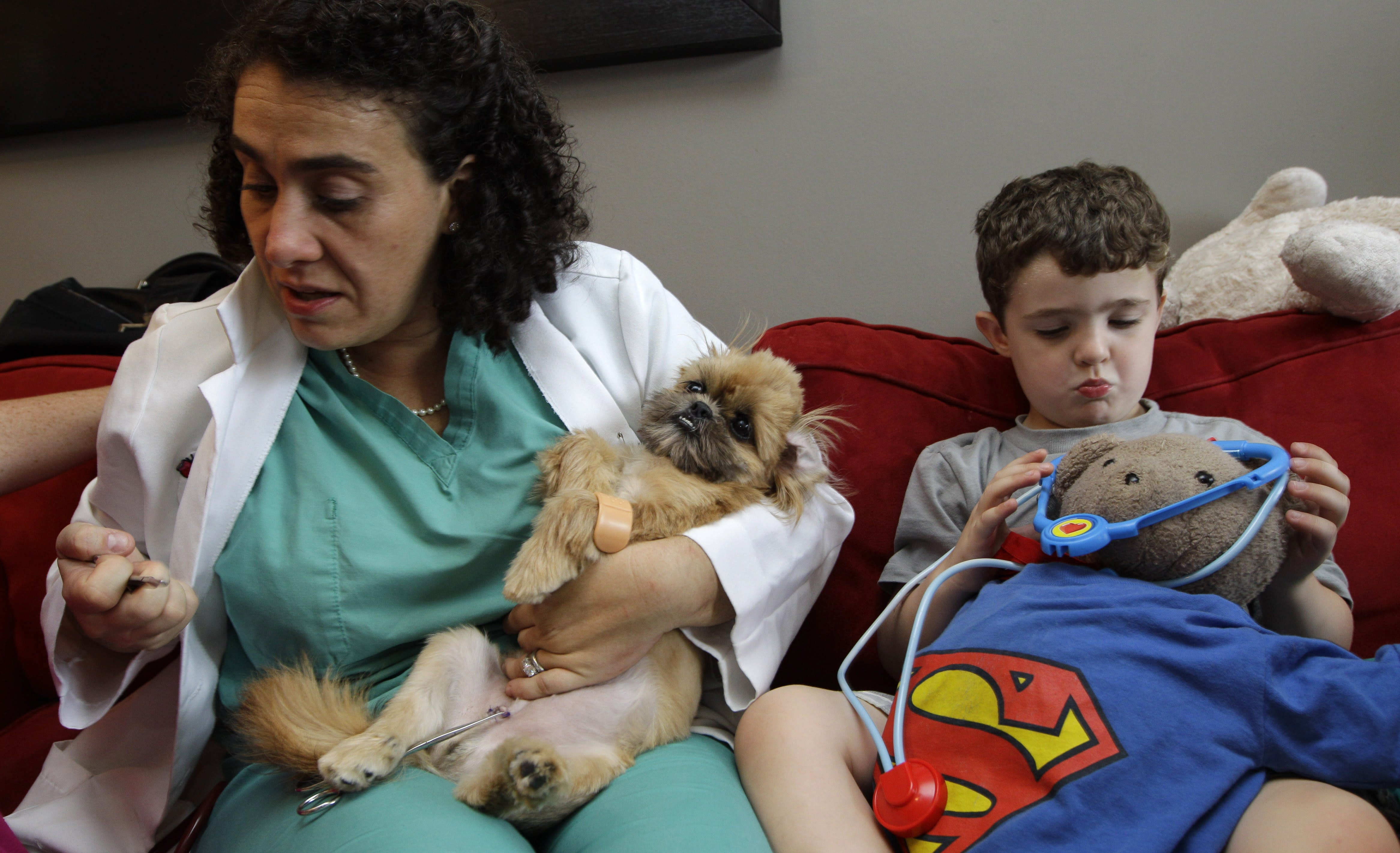 Veterinarian Elisabeth Coletti, left, inspects stitches she just removed from Pooch, a family Shih Tzu that had recently been neutered, during a house call to the home of Erin McCarthy and husband Patrick Petrillo in New York, Thursday, Aug. 9, 2012, as son Sullivan Petrillo tends to his own teddy bear with a toy stethoscope. Coletti is part of a growing trend of family veterinarian that make house calls. (AP Photo/Kathy Willens)