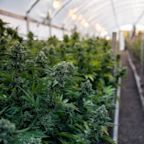 Water Ways Announces a New Order for a Cannabis Irrigation System in Israel