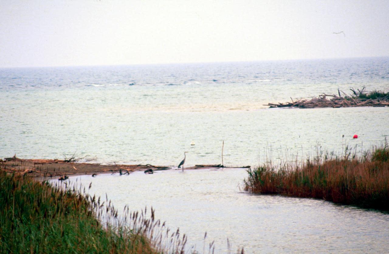 """Grosseto, fiume Ombrone sale: """"Lasciate le case"""""""