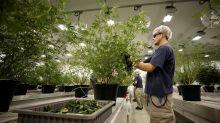 Canadian Cannabis Earnings Are A Bloodbath