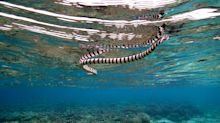 British man, 23, dies after being bitten by a sea snake while working on a fishing boat in Australia