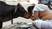 Rajasthan Has a New Anti-Lynching Law, But Do Cattle-rearing Meo Muslims Feel Any Safer?