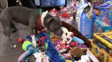 Abrigo de animais proporciona surpresa de Natal para seus cães e gatos