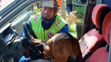 Goat gets head stuck in steering wheel while chasing Negri Sembilan woman