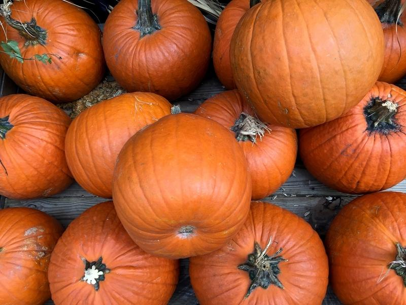 Many Colorado farms are offering pumpkin picking this fall.
