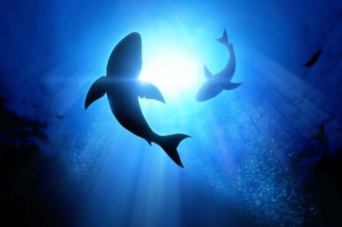 Utah's First Shark Tank-ish Event Raised Nearly $5 Million in 2 Days