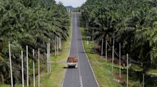 Two-thirds of Singapore brands refuse to disclose palm oil usage: WWF report