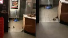 Popular Oporto store closed after video exposes rat infestation