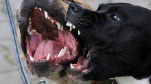Bouches-du-Rhône: un septuagénaire blessé par trois chiens lors d'un jogging à Istres