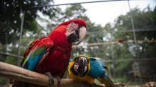 Birds get new wings at Brazil rehab center