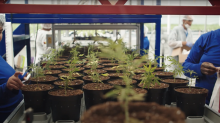 Aphria stock jumps 10%, analyst dubs the pot company 'belle of the ball'