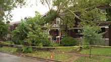 Neighbors Say They Warned City About Giant Tree That Toppled on Homes