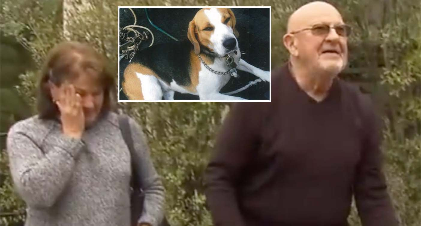 Emotional end to man's desperate search for stolen dog