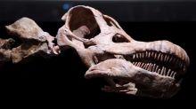 Fósseis de titanossauro são encontrados pela primeira vez no Equador