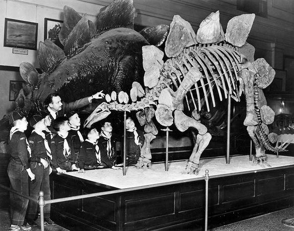 Dinosaur Era Had 5 Times Today's CO2