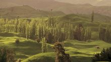 New Zealand Invites You To Join Them In Planting A 'Forest of Hope'