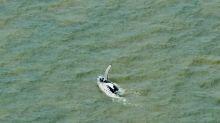 Una ballena logra salir de un río australiano infestado de cocodrilos
