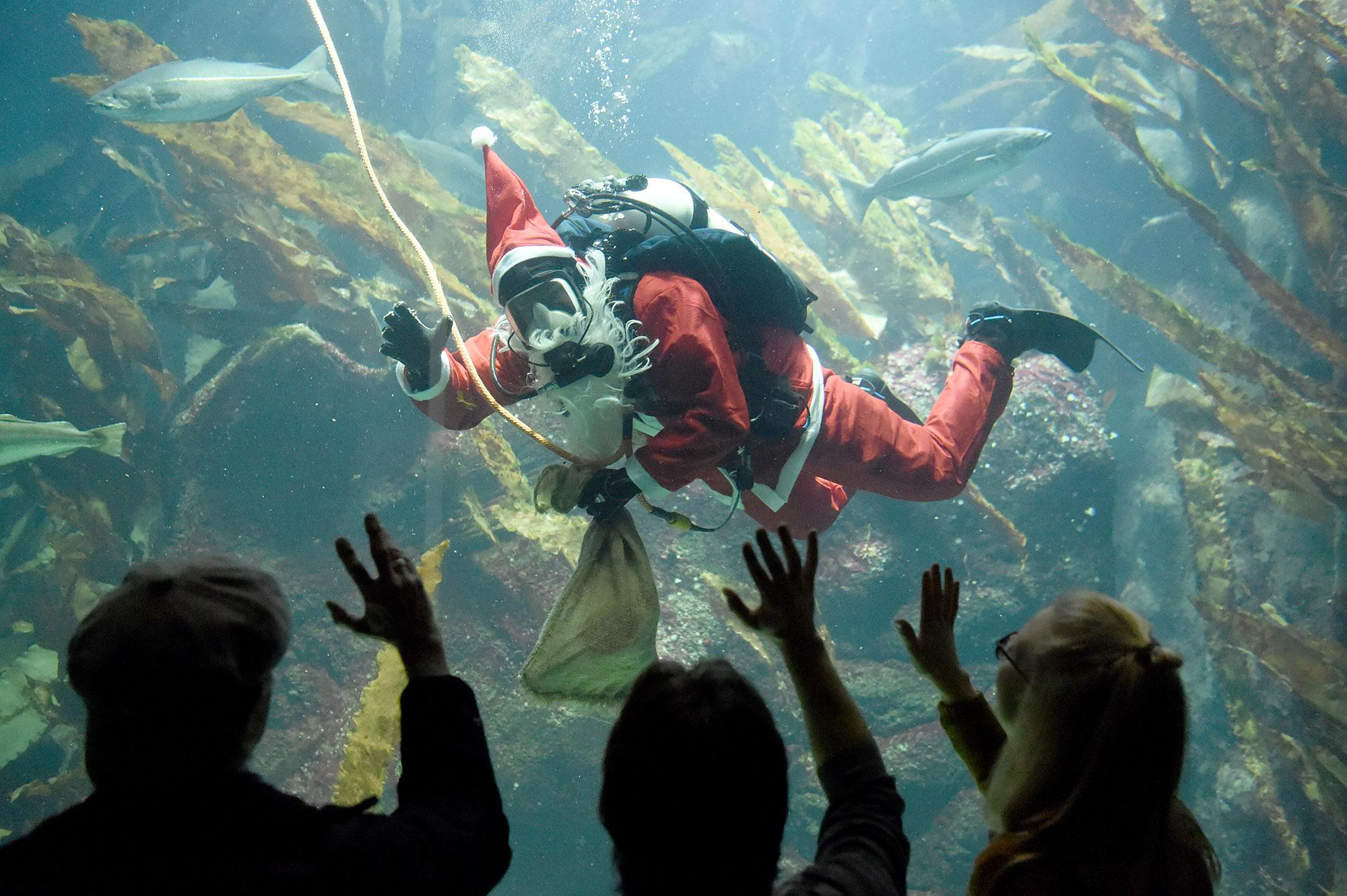 <p>A diver wearing a Saint Nicholas costume swims with the fishes in the big aquarium of the Multimar Wattforum in Toenning, Germany on Dec. 2, 2016. (Carsten Rehder/EPA) </p>