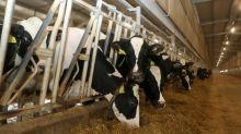"""La laiterie Baladna, symbole de la """"résistance"""" à l'embargo, entre à la Bourse de Doha"""